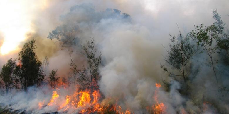 Skogsbrand Bild: Flickr/bertknot