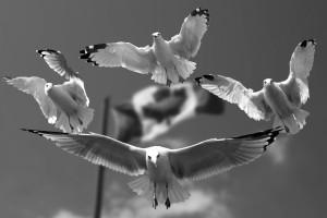 gulls-540791_bw