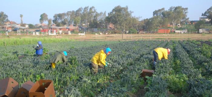 Säsongsarbetare på jordbruk. Bild: Suzie's Farm/Flickr