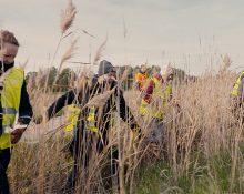 En skallgångskedja av personer i gula varselvästar som går bredvid varandra genom vass