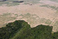 Bild som visar en tredjedel bördig regnskog och resten en gul och torr avverkad yta